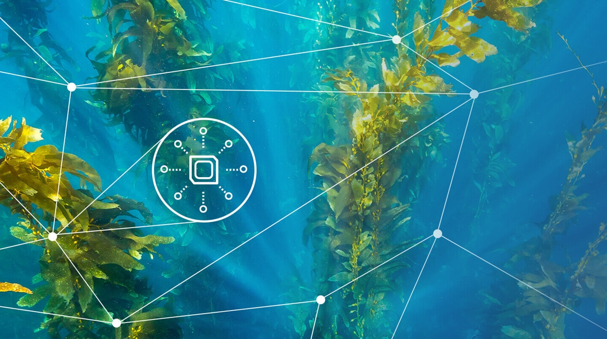 Keysight Connected Kelp: Using the IoT to Ensure Ocean Safety